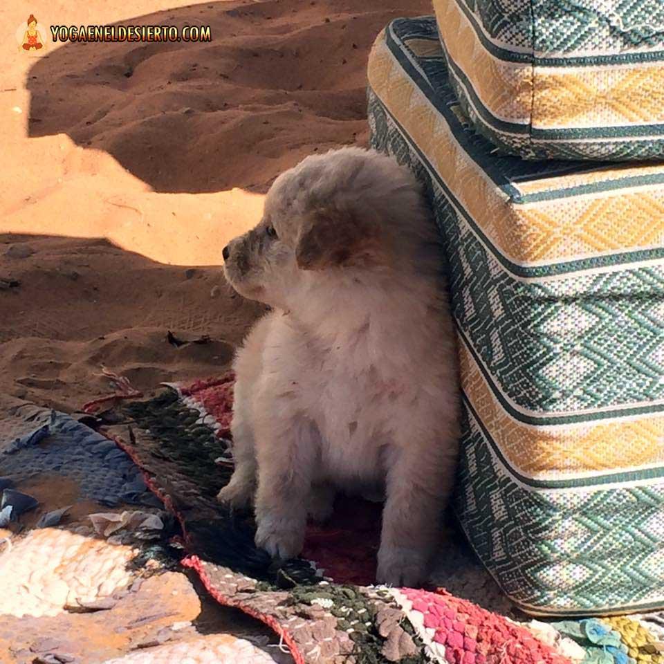 asanas-yoga-desierto-004a